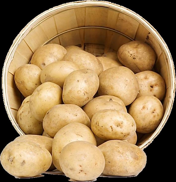favpng_sweet-potato-potato-starch-vegetable-food-1-1.png